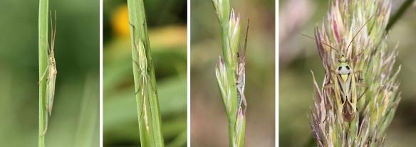 Plant bugs blending in