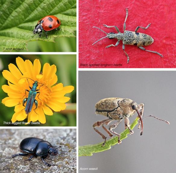 Beetles candidates 2